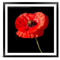 Remembrance Poppy, Framed Mounted Print