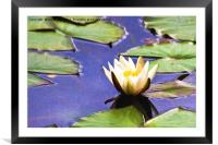 Artistic Water Lily, Framed Mounted Print