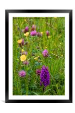 English Wild Flower Meadow, Framed Mounted Print