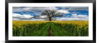 Field Of Rapeseeds, Framed Mounted Print