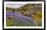Rannerdale Bluebells - 02, Framed Mounted Print