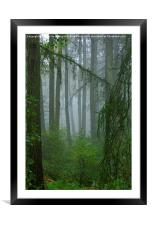 Misty woodland near May Beck and Falling Foss, Framed Mounted Print