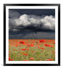 Poppy storm, Framed Mounted Print
