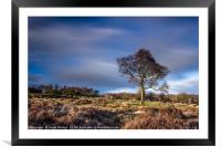 Hawthorn and Passing Clouds, Framed Mounted Print