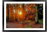Forest of Dean, Framed Mounted Print