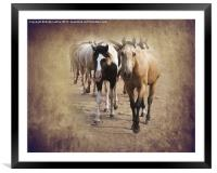 American Quarter Horse Herd, Framed Mounted Print