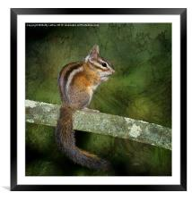 Chipmunk in the Woods, Framed Mounted Print