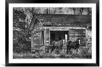 Is This Our Barn, Framed Mounted Print