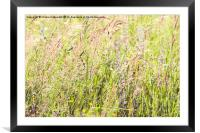 Countryside nature , Framed Mounted Print