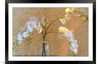 Orchid display!, Framed Mounted Print