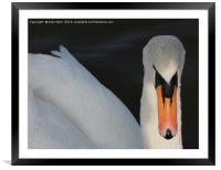 Close Up, Framed Mounted Print