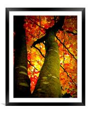 FALL COLORS, Framed Mounted Print