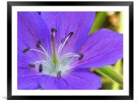 Tiny pruple in abstract, Framed Mounted Print