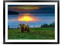 Highland Cow in Loch Lomond Sunset, Framed Mounted Print