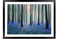 Bluebell Woods, Framed Mounted Print