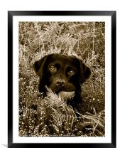 Amongst the Undergrowth, Framed Mounted Print