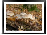 Woodland wonders, Framed Mounted Print