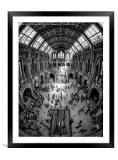 Natural History Museum, London, Framed Mounted Print