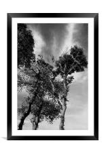 Scots Pine, Framed Mounted Print