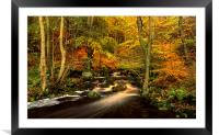 Autumn Glory in Padley Gorge, Framed Mounted Print