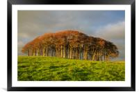 The Nearly Home Trees, Framed Mounted Print
