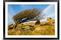 Lone Hawthorn Tree, Framed Mounted Print