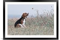 The Beagle, Framed Mounted Print
