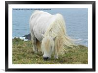 PONY GRAZING, Framed Mounted Print