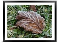 Frost on a Brown Leaf                        , Framed Mounted Print