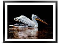 Gliding across the Lake, Framed Mounted Print