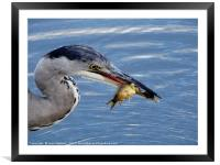 Supper Time                             , Framed Mounted Print