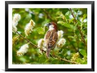 Gathering Nesting Material                    , Framed Mounted Print