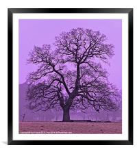 Tree on a winters morning, Framed Mounted Print