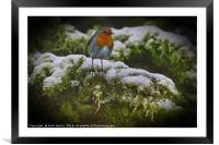 Winter Robin, Framed Mounted Print