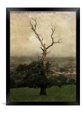 The Skeletal Tree, Framed Print