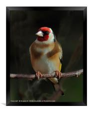 Goldfinch In The Shadows, Framed Print