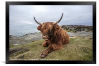 Highland Cow Chilling Out, Framed Print