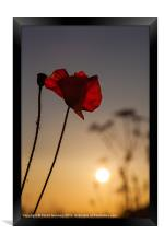 Among the Poppies, Framed Print