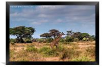 Giraffe in Africa, Framed Print