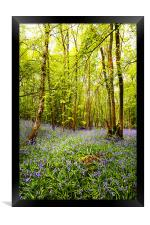 Bluebells and Trees, Framed Print