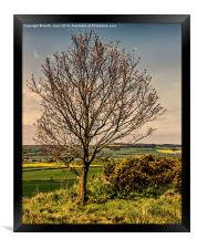 Tree With A View Pinchinthorpe, Framed Print