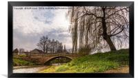 Weeping Willow, Framed Print