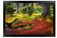 Colorful Carpet of Moss in Benmore Botanical Garde, Framed Print