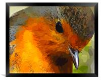A beautiful close up view of a robin , Framed Print