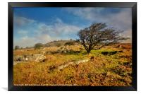 Stowes Hill and wind blown tree on Bodmin Moor, Framed Print