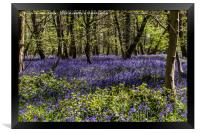 Binfield Heath Woods in South Oxfordshire, Framed Print