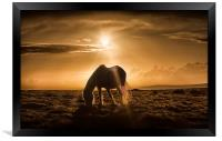 Gower pony at sunset on Cefn Bryn, Framed Print