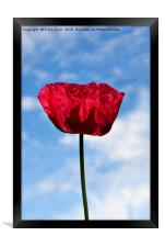 Beautiful Red Poppy, Framed Print