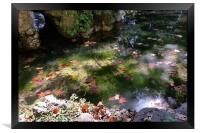rays and leaves on water, Framed Print
