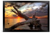 Driftwood Sunset, Framed Print